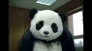 panda cheese never say no to panda ad campaign vol 1