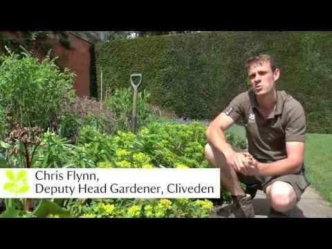 Top tips from National Trust Gardens - June