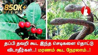 தப்பி தவறி கூட இந்த செடிகளை தொட்டு விடாதீர்கள்..! மீறி தொட்டால் மரணம் கூட நேரலாம்...! - Tamil Voice