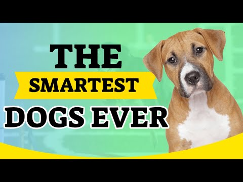 Know which are the smartest dogs ever 🤓. Top 20🥰🐶