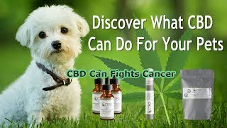 CBD Oil For Dogs: What You Might Not Know