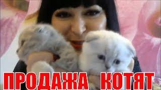Продажа Котят Питомник MARILYN CLUB