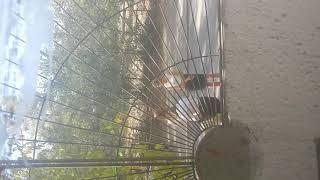Телочки курят возле 86 дома школьницы