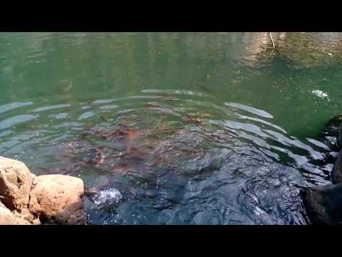 Bangriposi Brahman kund