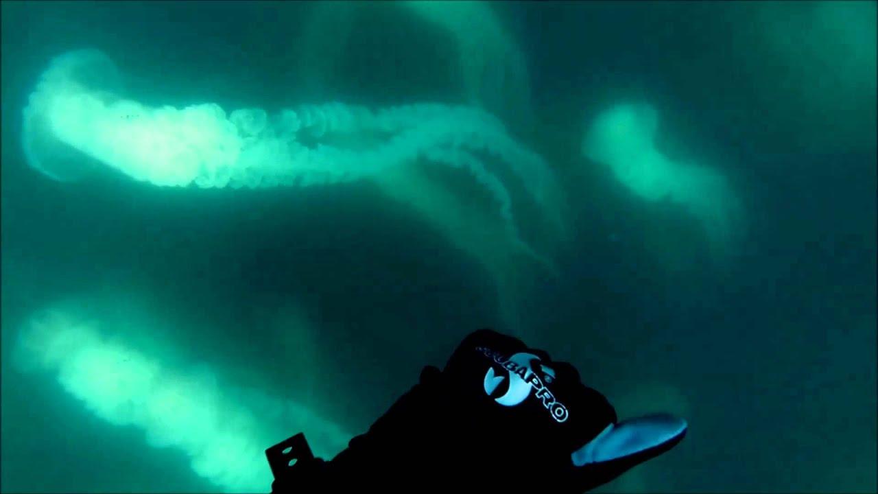 Jellyfish dive hd chile 2014 youtube - Porno dive hd ...