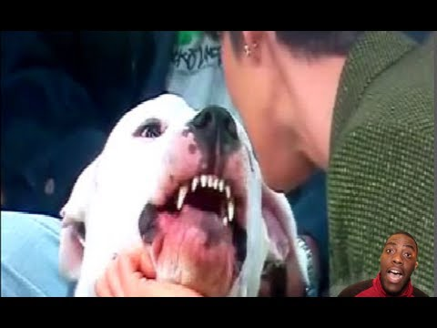 RE:Dog Bites News Anchor In The Face On Live TV! (Ripping Her Lip Off) - YouTube
