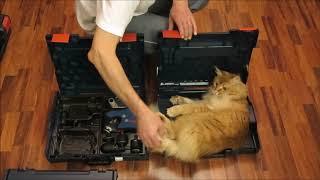Кот оценил новый L-BOXX