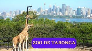 VOYAGE EN AUSTRALIE ET EN NOUVELLE CALEDONIE - PART 4 - ZOO DE TARONGA