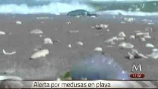 Invaden medusas la playa Bagdad de Matamoros, Tamaulipas