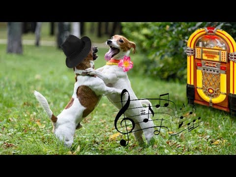 FUNNY Dogs Dance To Music Like Dancer |  Funny Pets Compilation