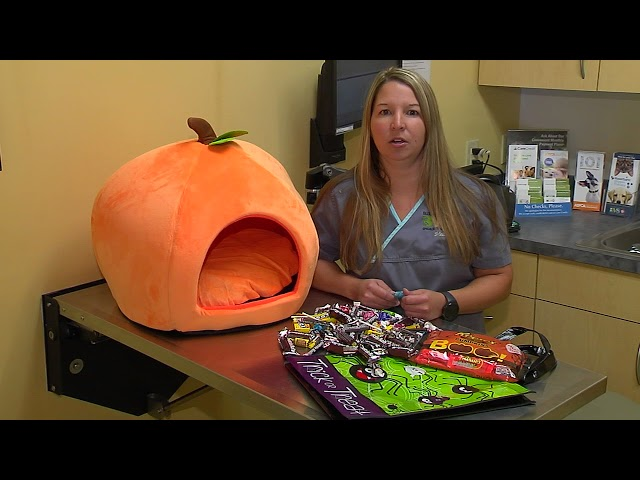All About Pets - 10/26/17 Halloween Pet Safety, Melissa Davis, LVT, Former Internal Medicine Nurse