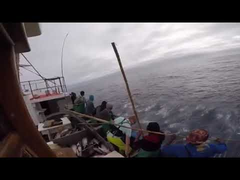 Tuna fishing Cape Town RSA