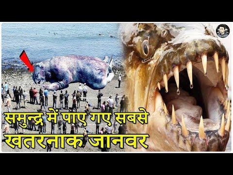 दुनिया के सबसे खतरनाक जानवर    World's Deadliest Animals in The World in Hindi