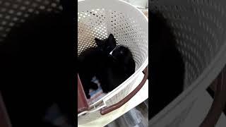 Любимые котята 😍