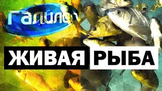 Галилео. Живая рыба 🐟 Fish