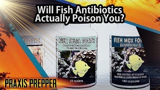 Are Fish Antibiotics Safe? Here's What Happened When I Took Them.