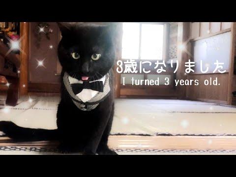 猫の誕生日をお祝いする、の巻 Happy 3rd birthday
