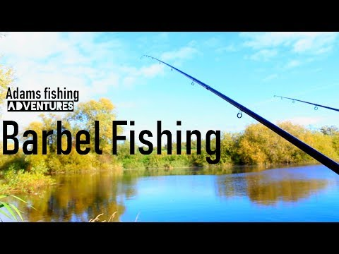 Autumn Barbel Fishing The River Ouse