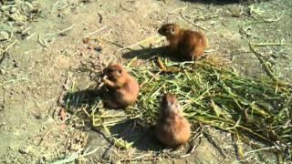 高知県立のいち動物公園のプレーリードッグです。 (人間の)子供が顔を...