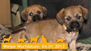 Mischlingshunde Welpen In Lichtenau
