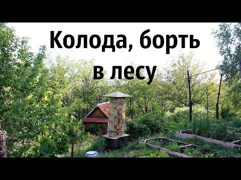 Как я пчёл завёл: обзор колод + заселение