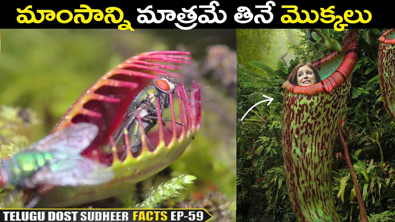TOP INTERESTING & UNKNOWN FACTS IN TELUGU   TELUGU FACTS   DO YOU KNOW EP-59