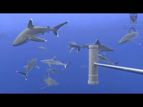 Chagos BIOT - 2015 pelagic baited camera surveys