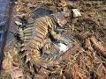 【ゆっくり】ヨロイトカゲを飼ってみませんか? の動画、YouTube動画。