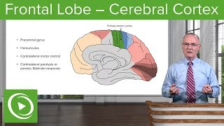 Frontal Lobe – Cerebral Cortex | Lecturio