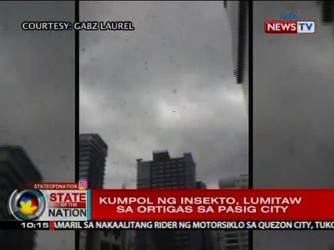 SONA: Kumpol ng insekto, lumitaw sa Ortigas sa Pasig City