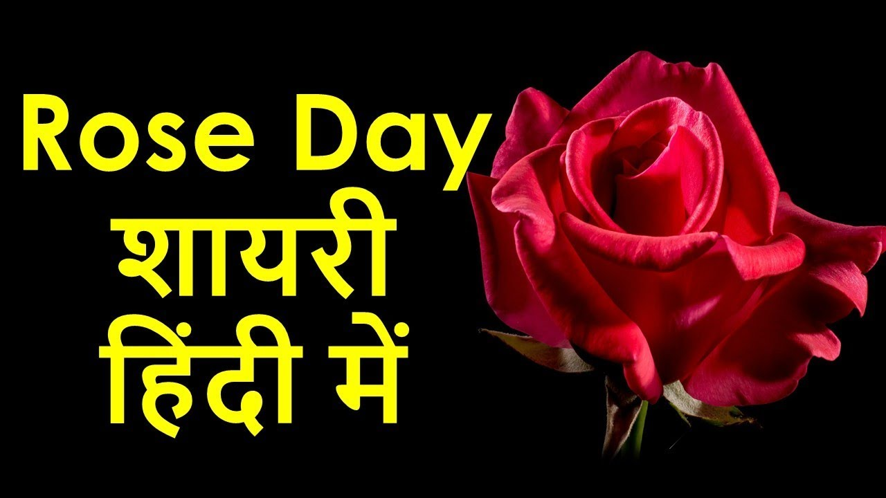 र ज ड श यर ह द म Rose Day Shayari In