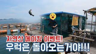[삼척김씨TV]우럭 자연산만들기 프로젝트^^ 도비도 부…