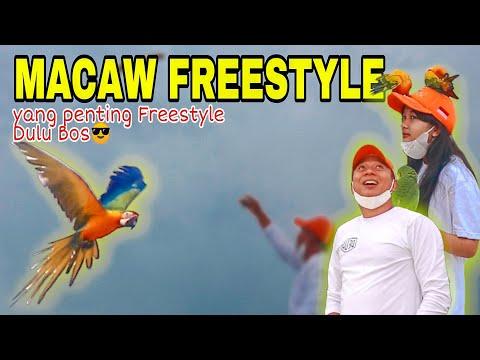 KEREN !! MACAW FREESTYLE DI LANGIT KENDARI 😎