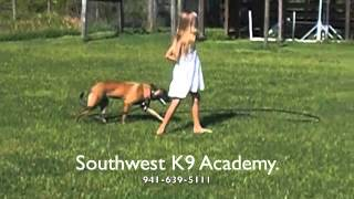 8 Year-old Girl Training A Belgian Malinois Puppy