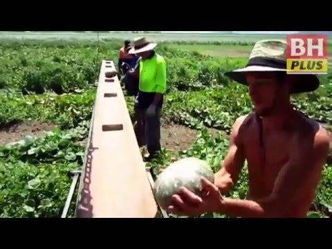 Gaji RM6,000 petik buah di Australia