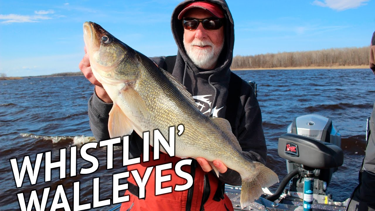 Huge walleyes on rainy river whistler jigs youtube for Rainy river fishing report 2017