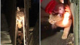 Несчастный кот истошно мяукал, застряв в щели между двумя домами