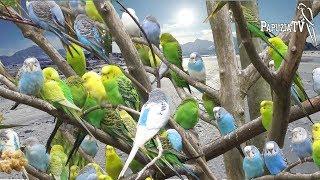 Papugarnia na Alasce - nie kupuj papugi z papugarni