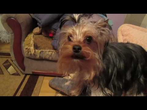#Funny Dog - A Funny #Dog Videos - Funny #animal compilation - Funny dog #compilation