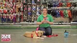 Teaching Your Dog To Lay Down - Maxi Zoo Ireland