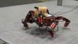 DLD 2009: Die Roboter kommen