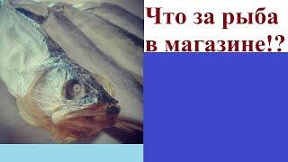 Что за рыба в магазине!?