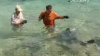 Shark Expert Attacked While Filming