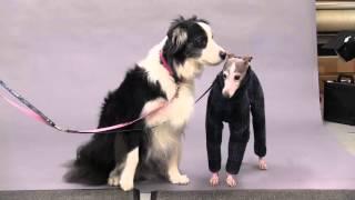 犬と記念写真を撮影に来たご夫婦。撮影後、看板犬と、イタリアングレー...