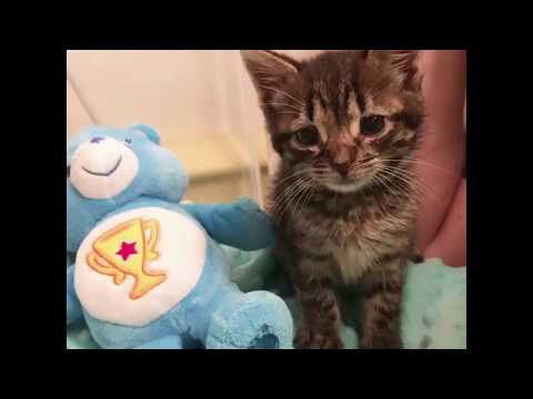 Meet Hudson, A Kitten With a Special Story.