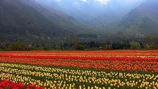 TOP 5 | Srinagar Experiences