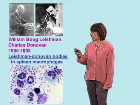 Norma Andrews (U. Maryland) Part 2:  Leishmania spp and Leishmaniasis