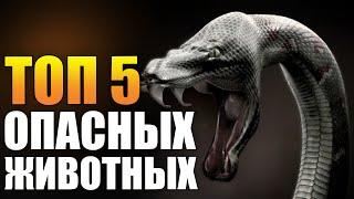 Топ 5 опасных животных