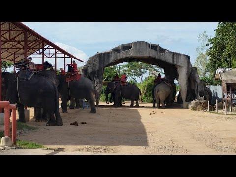 2016 0731泰國五日遊 Day 3 (騎大象,東芭樂園,四方水上市場)