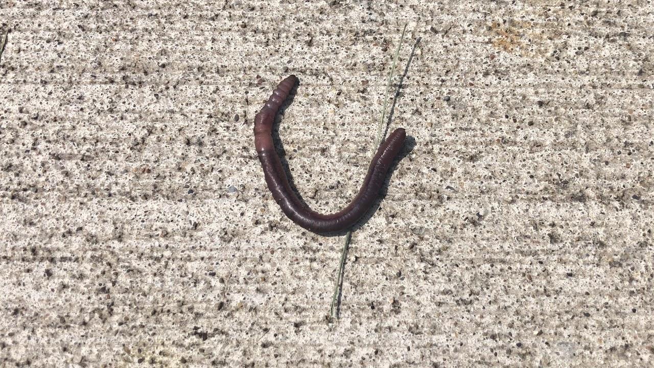Wade Lagoon (Earthworm)